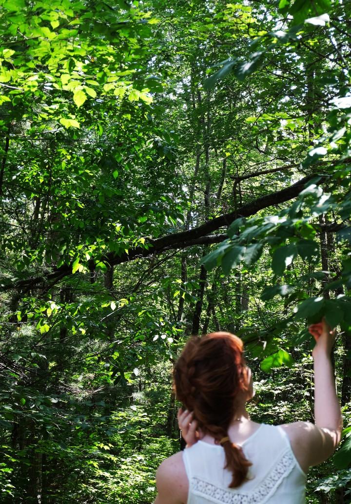 Nemoricultrix: Forest Haunting