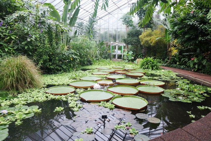 Royal Botanic Garden, Edinburgh {Part1}